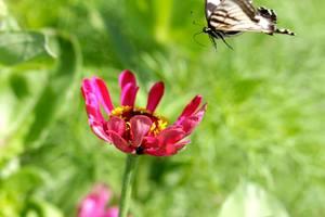 Pollinator Workshop And Planting For Northampton Bee Week