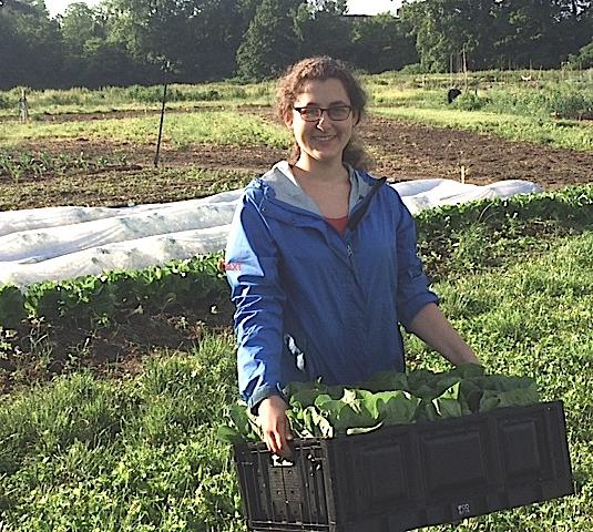 Summer Internships With Grow Food Northampton!