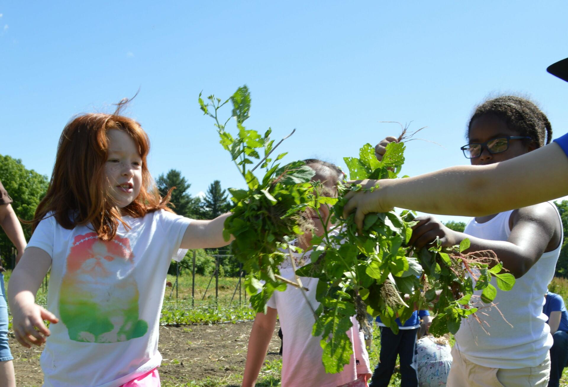 Local Schools Visit Grow Food Northampton!
