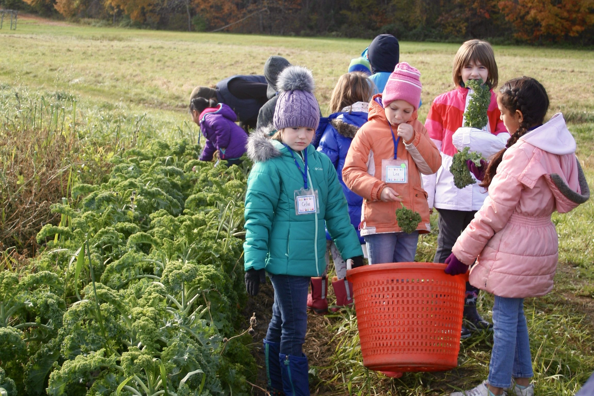 Grow Food Kids: Big Plans For 2019-20