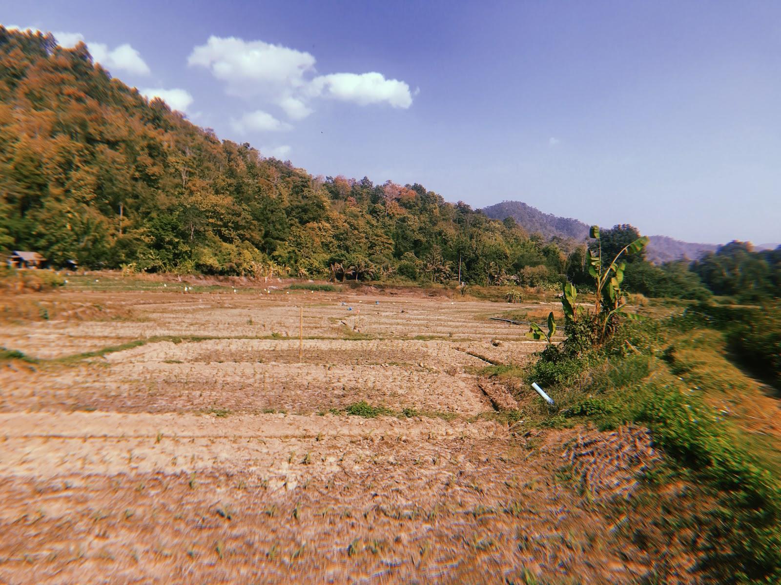 GFN Abroad: Terrace Farming In Thailand